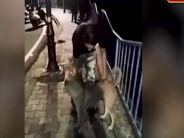 Bhopal police arrests man who threw dog into lake